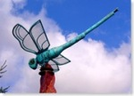 woodinville-dragonfly-thumb.jpg