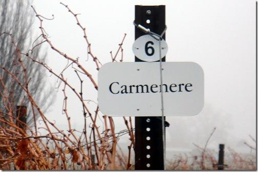 carmeneresign