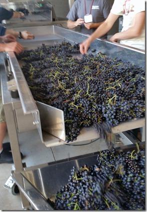 Harvest 2 photo